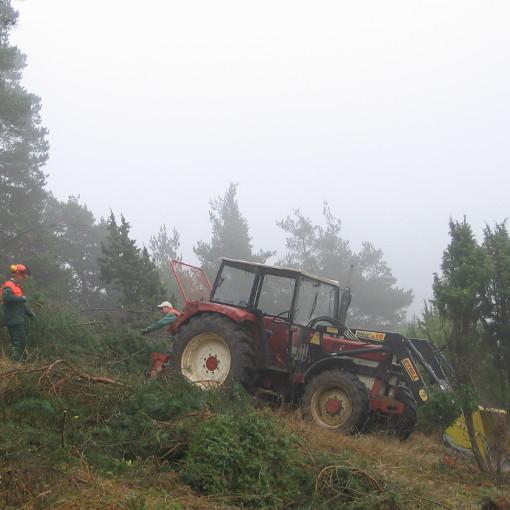 Buldog im Nebel auf dem Magerrasen